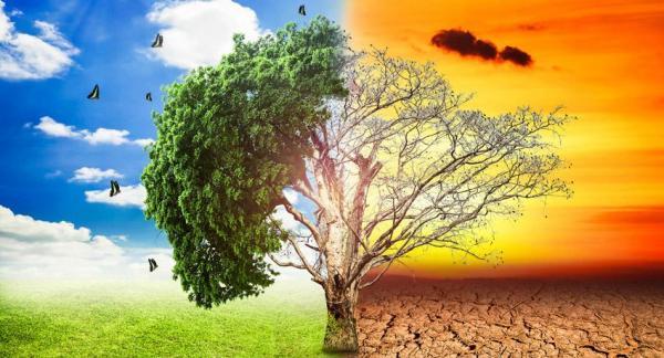 Demandas Al Estado Por Daños Ambientales